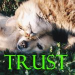 How to Build Trust for Your Website